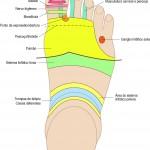 Mapa de Reflexologia Podal (Dorsal)