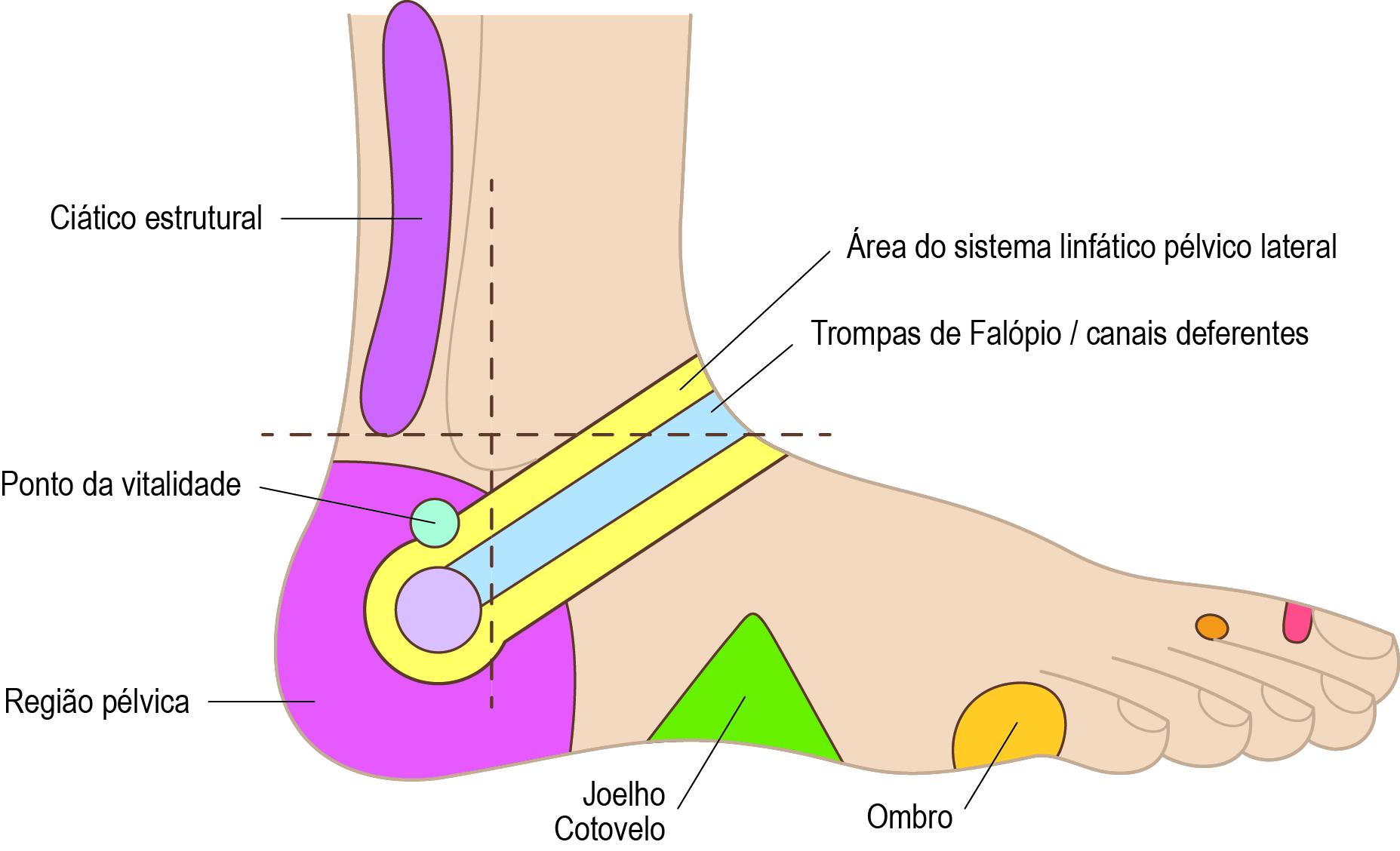 Mapa de Reflexologia Podal (Lateral Externa)